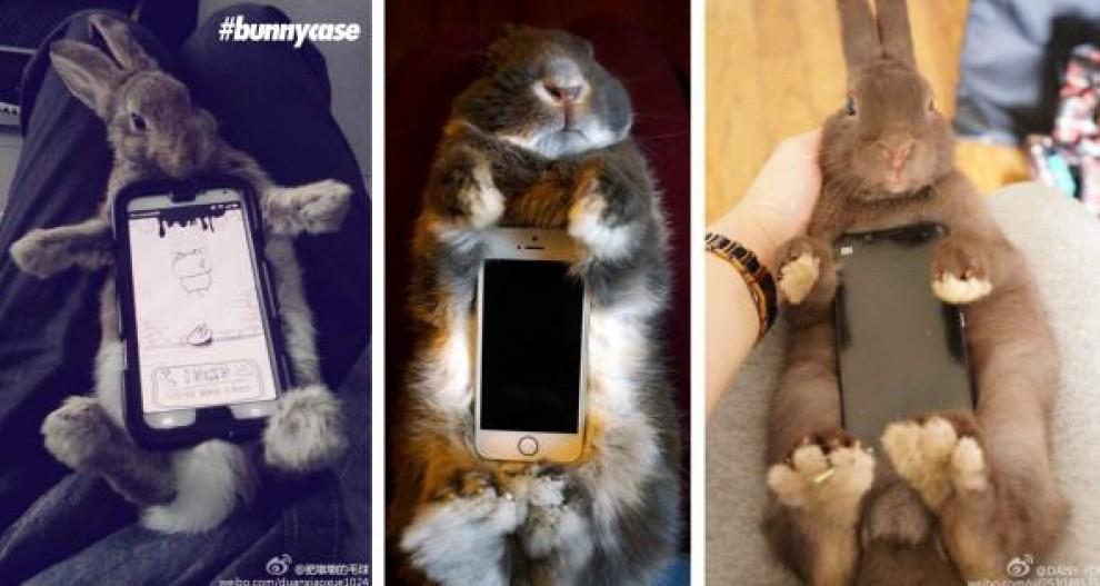 """Coniglio """"poggia-smartphone"""": la nuova moda giapponese lanciata su Twitter09"""