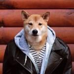 Bodhi, il cane indossare da 10mila dollari al mese FOTO9