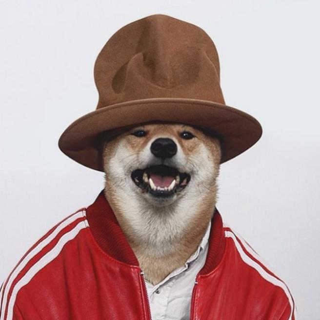 Bodhi, il cane indossare da 10mila dollari al mese FOTO01