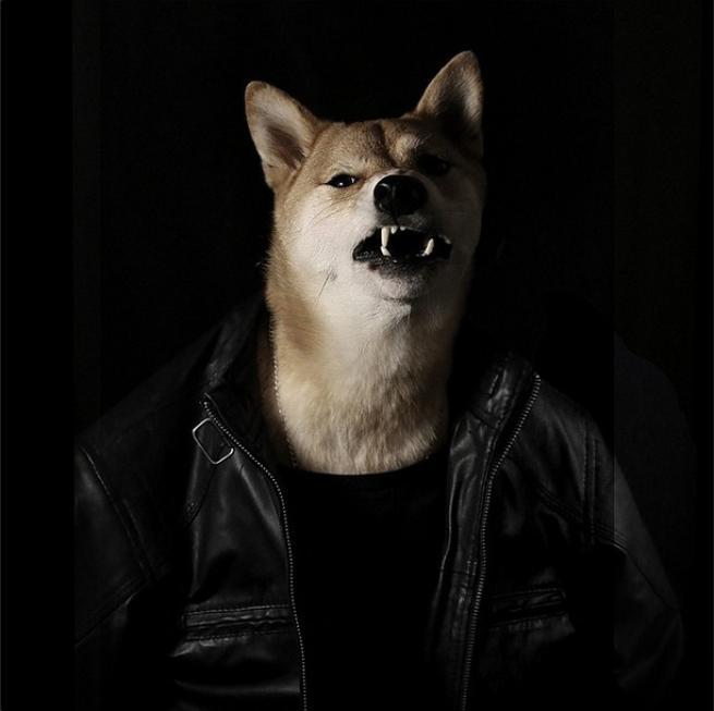 Bodhi, il cane indossare da 10mila dollari al mese FOTO08