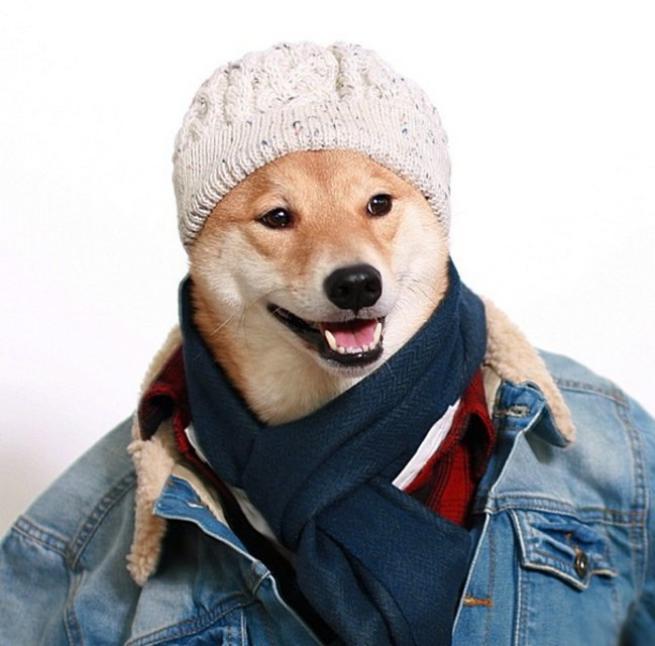 Bodhi, il cane indossare da 10mila dollari al mese FOTO06