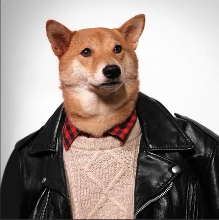 Bodhi, il cane indossare da 10mila dollari al mese FOTO05