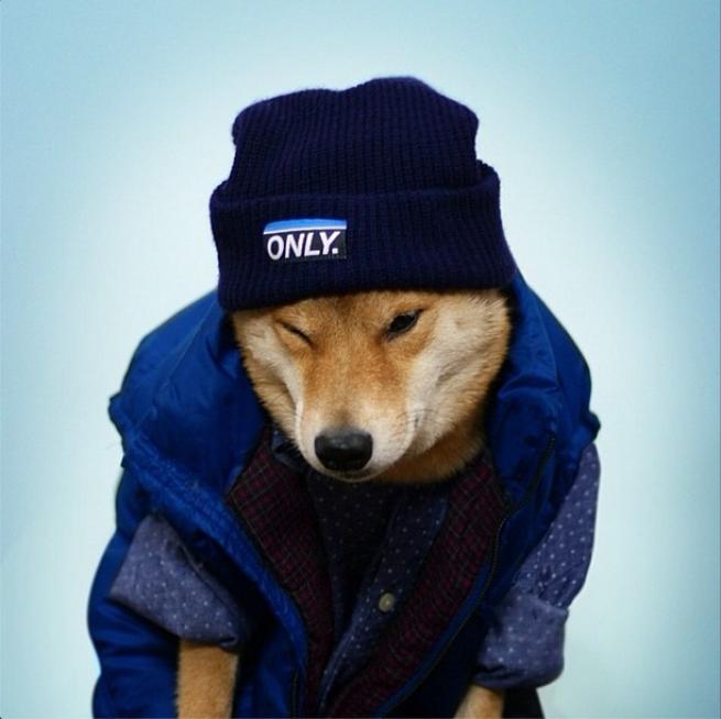 Bodhi, il cane indossare da 10mila dollari al mese FOTO04