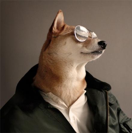 Bodhi, il cane indossare da 10mila dollari al mese FOTO03