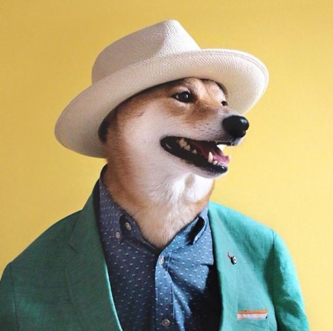 Bodhi, il cane indossare da 10mila dollari al mese FOTO02