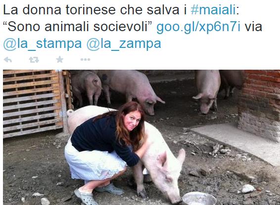 """Torino, la donna che alleva """"maiali da compagnia"""""""