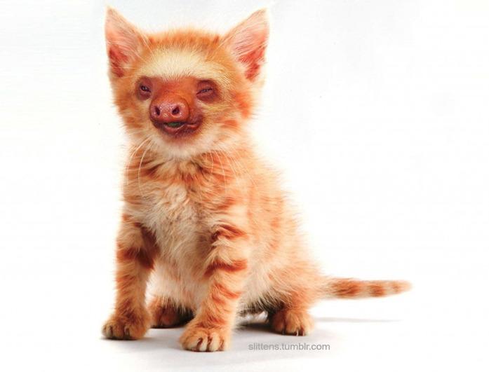 """Gadipo"""", sul web impazza l'adorabile incrocio tra un gatto e un bradipo06"""