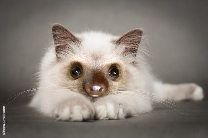 """Gadipo"""", sul web impazza l'adorabile incrocio tra un gatto e un bradipo05"""