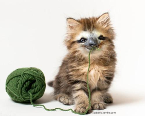 """Gadipo"""", sul web impazza l'adorabile incrocio tra un gatto e un bradipo4"""