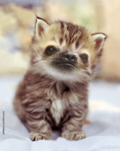 """Gadipo"""", sul web impazza l'adorabile incrocio tra un gatto e un bradipo03"""