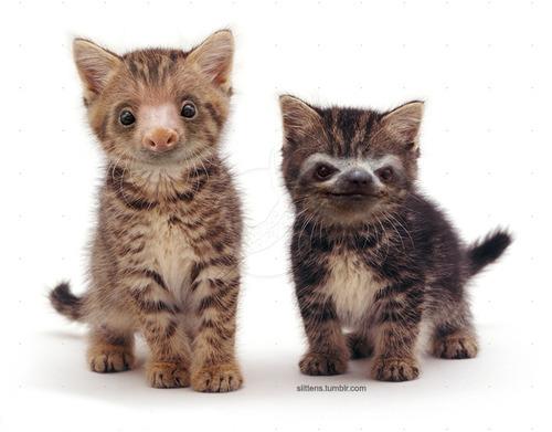 """Gadipo"""", sul web impazza l'adorabile incrocio tra un gatto e un bradipo01"""