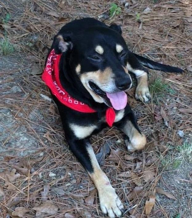 Sopravvive a 2 eutanasie e ad un incidente: ecco Lazarus, il cane miracolato05
