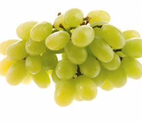 Acne, l'ultima cura arriva dall'uva: è il resvetrarolo