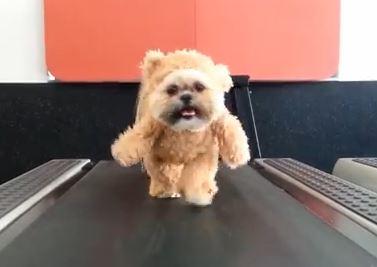 Il vostro cane è grasso? Ecco come farlo dimagrire VIDEO