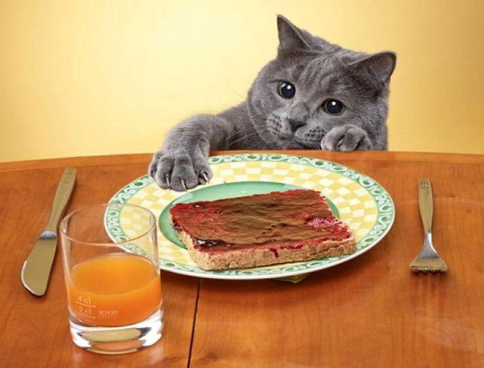 Gatti che rubano il cibo: colti in flagrante! (foto)