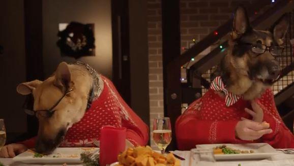 Una simpatica cena di Natale fra cani e gatti VIDEO