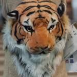 Elenoire Casalegno in via Montenapoleone con zaino con testa di tigre11
