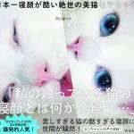 Setsu-Chan, il gatto giapponese che quando dorme diventa brutto08