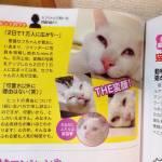 Setsu-Chan, il gatto giapponese che quando dorme diventa brutto05