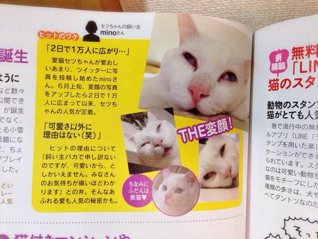 Setsu Chan Il Gatto Giapponese Che Quando Dorme Diventa Brutto05