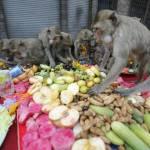Thailandia, il buffet per sole scimmie02