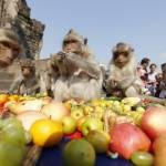 Thailandia, il buffet per sole scimmie01