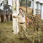 Ungheria, baby giraffa nutrita col biberon 02