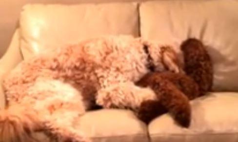 Abbraccio tra cani: uno è nervoso, l'altro lo tranquillizza VIDEO
