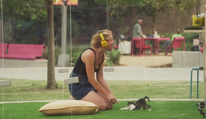 Hollywood, la cat therapy per combattere lo stress VIDEO