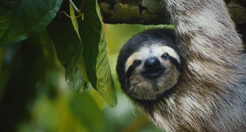 """Turismo in Costa Rica, spot col bradipo ironizza sulla """"giungla metropolitana"""""""