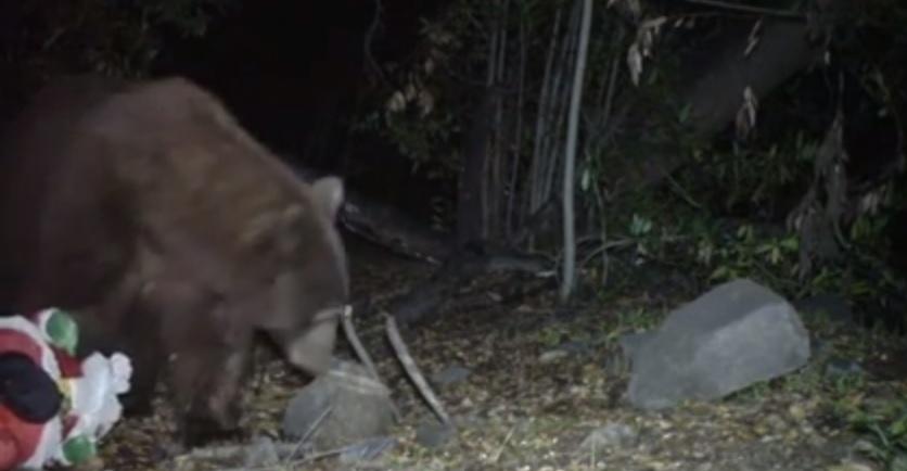 L'orso che scopre l'esistenza di Babbo Natale
