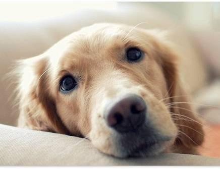 Rapamicina, il farmaco allunga-vita per animali domestici