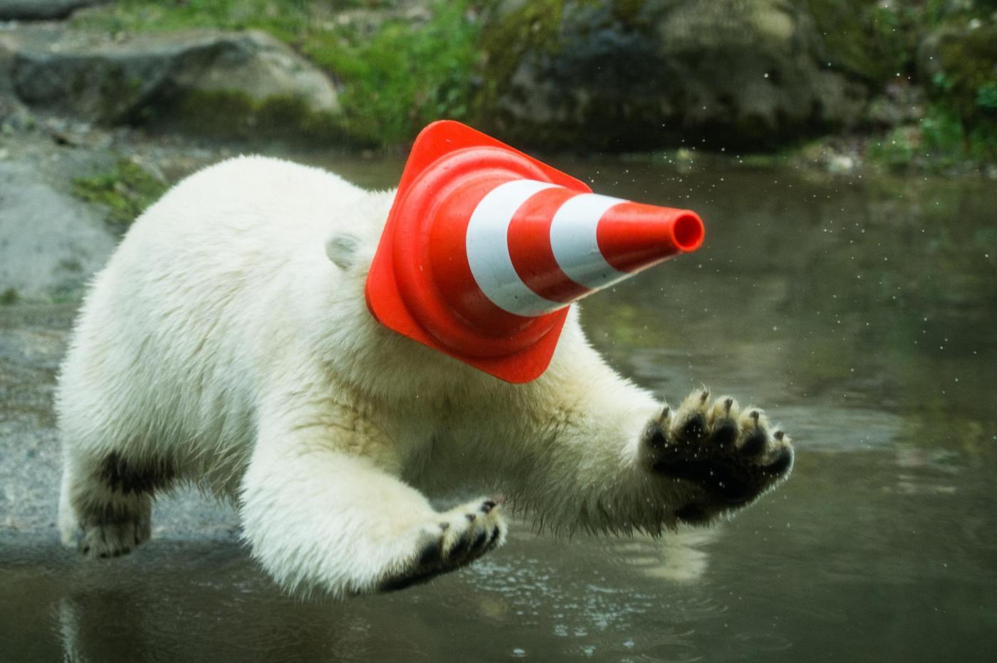 Nela e Nobby, i due orsi polari che giocano col birillo05