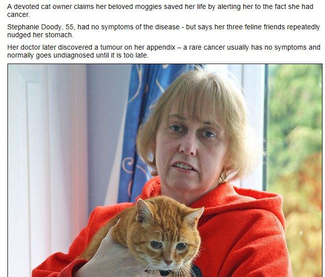 """""""I gatti hanno annusato il mio tumore"""": il racconto di una donna inglese"""