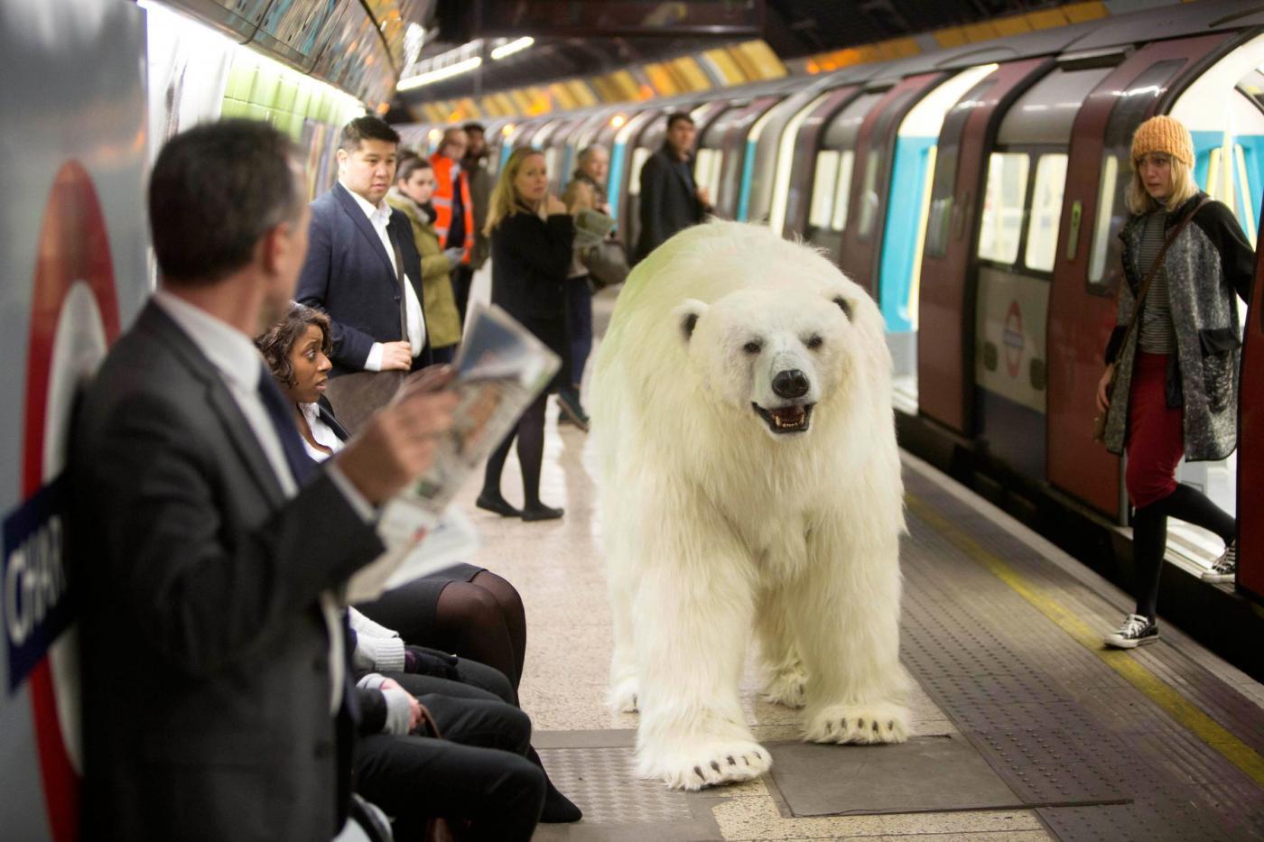 Risultati immagini per orso polare in città