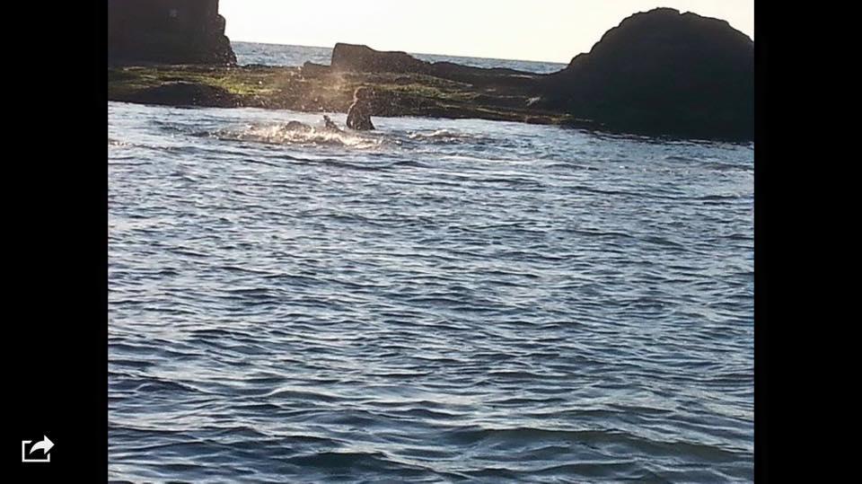 VIDEO YouTube: balena spiaggiata a NapolI: l'imprenditrice Debora Di Meo la salva