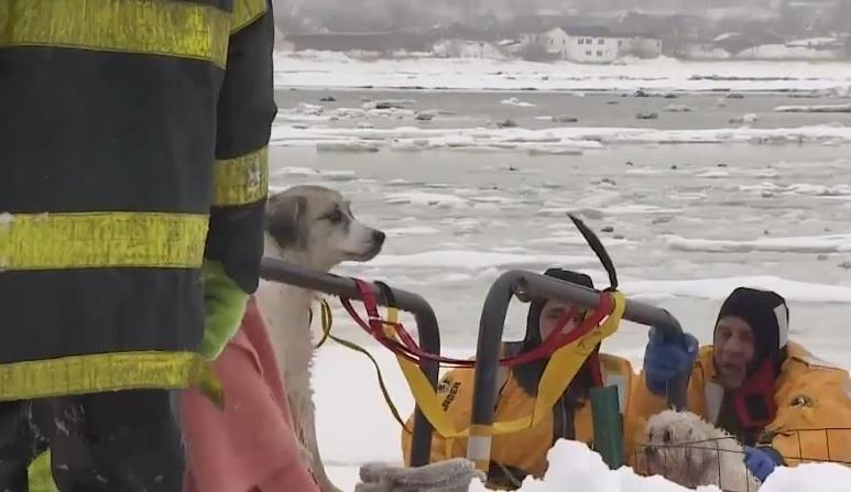 VIDEO YouTube. Lola e Thunder bloccati nel ghiaccio: cani salvati dai pompieri