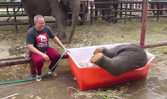 VIDEO Youtube, bagnetto del baby elefante finisce in rete