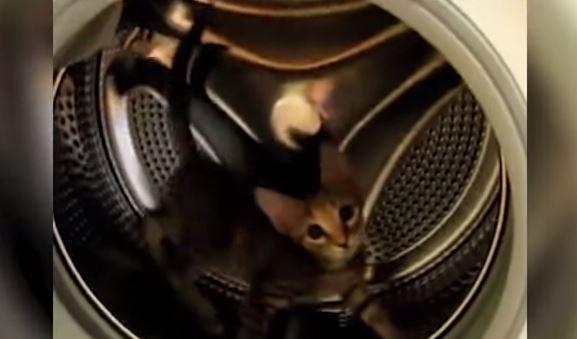 VIDEO Youtube, gatto finisce nella lavatrice spenta e non riesce a uscire