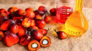 Olio di palma e salute – L'olio è palma è cancerogeno?