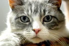 Fidanzato no grazie! 16 motivi per cui un gatto è meglio di un uomo