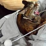 Megwaroo, la felpa-marsupio per fare le coccole al gatto di casa FOTO