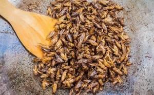 Farina di grillo, la nuova frontiera del cibo ecosostenibile