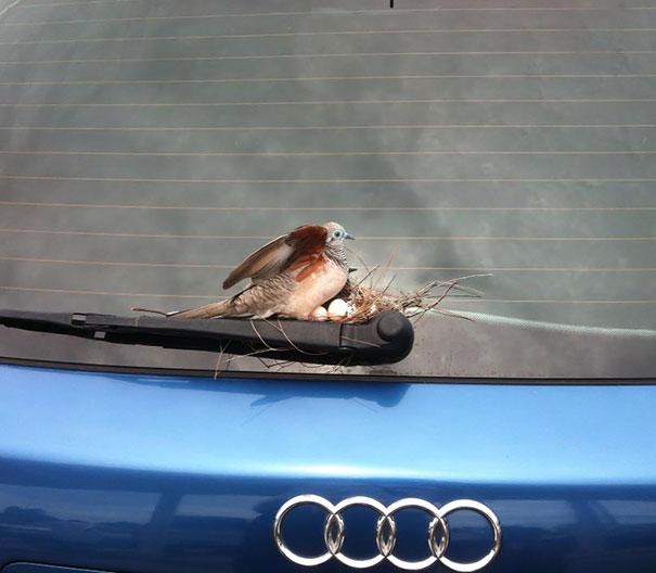 I nidi degli uccelli nei posti più strani FOTO Boredpanda 04