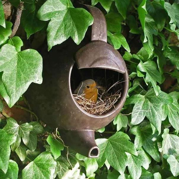 I nidi degli uccelli nei posti più strani FOTO Boredpanda 02