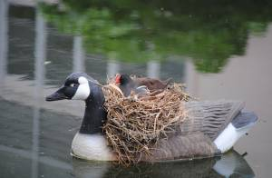 I nidi degli uccelli nei posti più strani FOTO Boredpanda