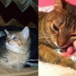 Cani e gatti di casa, la prima e l'ultima FOTO insieme9