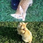 Cani e gatti di casa, la prima e l'ultima FOTO insieme13