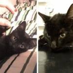Cani e gatti di casa, la prima e l'ultima FOTO insieme14