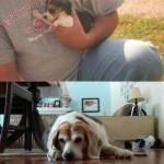 Cani e gatti di casa, la prima e l'ultima FOTO insieme7